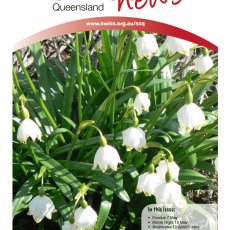 newsletter-swiss-club-queensland-issue-2-2016